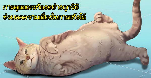 วิธีการสังเกตแมวว่าท้องหรือไม่ พร้อมวิธีดูแลและบำรุงครรภ์อย่างถูกต้อง
