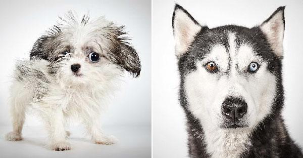 """ช่างภาพช่วย """"หมาถูกทิ้ง"""" ในการหาบ้านใหม่ ด้วยการถ่ายภาพสวยๆให้คนสนใจรับเลี้ยงพวกมัน"""