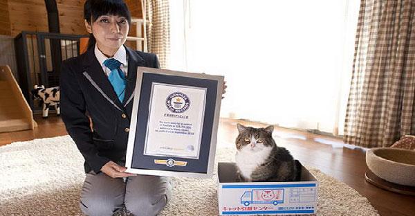 """เจ้ามารุแมวเซเลปคว้ารางวัล """"สัตว์ที่มีคนดูมากที่สุด"""" บนยูทูป ลงกินเนสเวิร์ลเรคคอร์ดไปเรียบร้อย"""