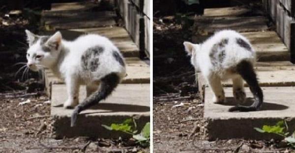 แมวจรสองขากับชีวิตที่ไม่ไว้ใจใคร จนกระทั่งสาวคนหนึ่งเปลี่ยนแปลงหัวใจมันได้