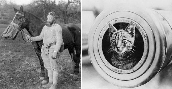 เผยภาพที่ไม่ธรรมดาของสัตว์ที่ร่วมต่อสู้กับมนุษย์ในสงครามโลกครั้งที่ 1 ที่หาดูได้ยากมากๆ