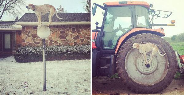 ภาพสุดยอดการทรงตัวที่ไม่ธรรมดา ของเจ้าหมาที่สามารถยืนบนอะไรก็ได้ในโลกใบนี้