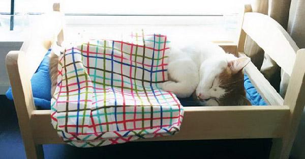 IKEA จัดให้ ! บริจาคเตียงตุ๊กตาให้แมวเหมียวในศูนย์พักพิงสัตว์ไปนอนอย่างฟิน !