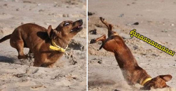 19 หมาบ๊องที่เล่นซนมากไปนิด จนชีวิตผิดพลาดไปหมด
