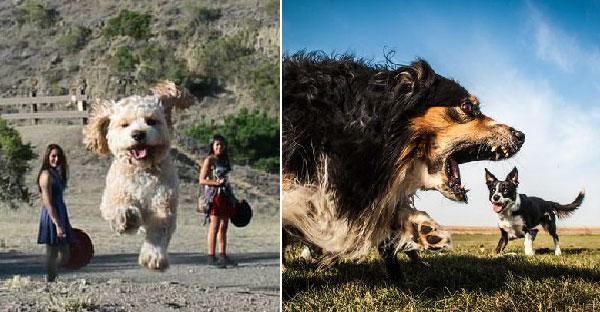"""20 ภาพโคตรเจ๋งที่จะเปลี่ยนมุมมองให้น้องหมาตัวใหญ่ยักษ์ด้วย """"มุมกล้อง"""""""