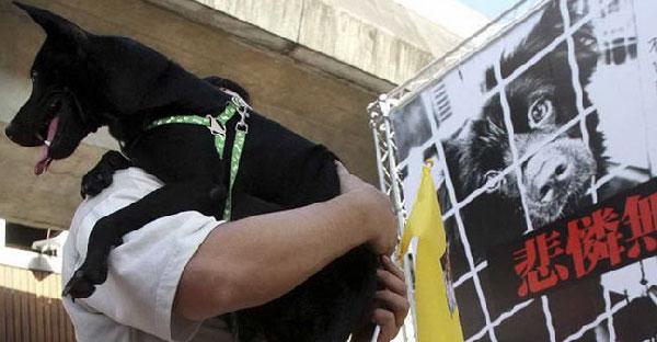 ข่าวดีสำหรับคนรักสัตว์ทั่วโลก ! ไต้หวันออก กม. ห้ามกินเนื้อหมา-แมวเป็นประเทศแรกในเอเชีย