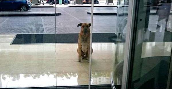 น้องหมารอตื้อแอร์สาวนาน 6 เดือน หาบ้านให้ก็หนีออกมา จนเธอใจอ่อนยอมรับเลี้ยงเอง