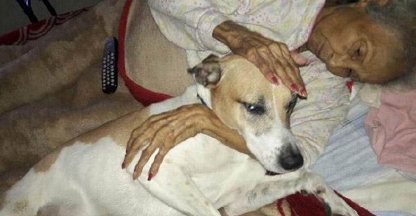คำขอสุดท้ายของคุณยายป่วยเป็นมะเร็ง คือการหาบ้านใหม่ให้หมาของเธอ