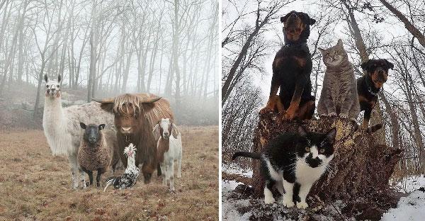 เมื่อสัตว์โลกกลายเป็นซุปตาร์บอยแบรนด์ พร้อมแอ็คท่าราวกับถ่ายภาพปกอัลบั้มเพลงดัง