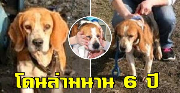 กู้ภัยสัตว์เจรจาเจ้าของบีเกิ้ล หลังพบถูกล่ามโซ่นานกว่า 6 ปี ขอมอบอิสระครั้งแรกในชีวิตให้
