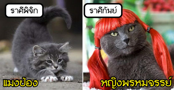 ถ้าแมวเปรียบดั่ง 12 ราศี จะเฮฮาขนาดไหนกัน