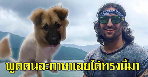 เจ้าของหมาพูดคนละภาษากับช่างตัดขนในเซินเจิ้น จึงได้ทรงขนยอดฮิตเมืองจีนมา