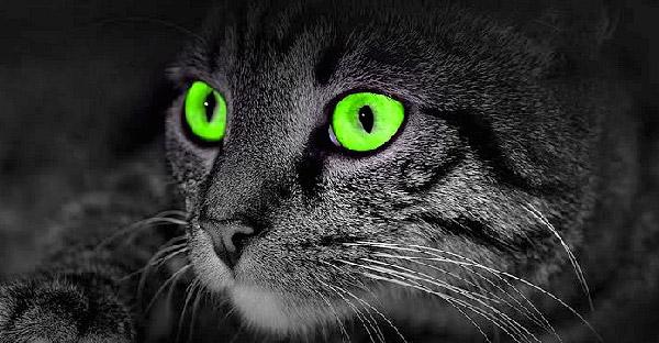 10 การทดลองทางวิทยาศาสตร์ ที่มีแมวเป็นผู้ช่วยค้นคว้าจนสำเร็จ