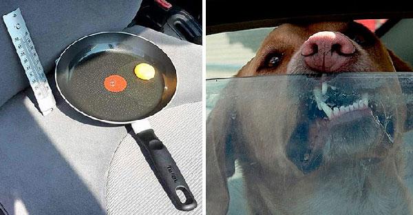 เมื่อทดลองนำไข่ใส่กะทะไว้ในรถที่ตากแดด..จะทำให้คุณเห็นว่าทำไมไม่ควรทิ้งสุนัขไว้ในรถ!!