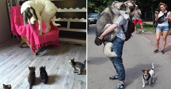มัดรวมภาพน้องหมาสายป๊อด ที่ทำตัวได้ไม่สมกับเป็นผู้พิทักษ์อันดับหนึ่งซะเลย
