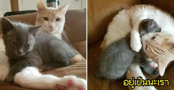 มิ้วน้อยเร่ร่อนจนพบบ้านใหม่ จึงอ้อนแมวเจ้าถิ่นมาเป็นพ่อใหม่ของมันทันที ♥‿♥