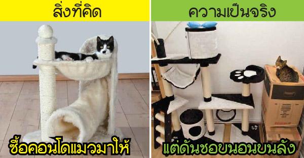 สิ่งที่คิดกับความเป็นจริงของบรรดาทาสแมว บางครั้งมันก็ช่างแตกต่างกันอย่างสิ้นเชิง