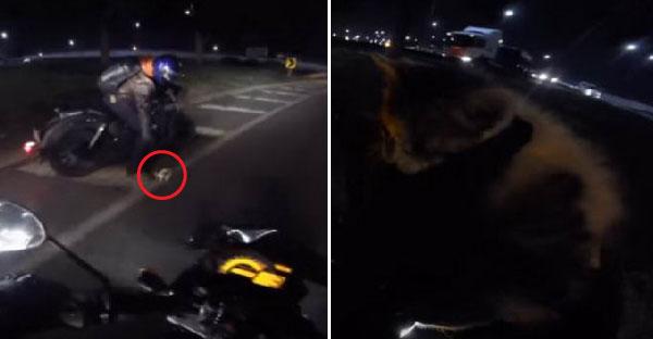 ไบเกอร์หนุ่มหยุดรถบนทางด่วนกลางดึก เพราะพบลูกแมวบาดเจ็บอยู่กลางถนน