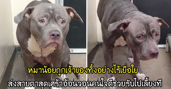 หมาน้อยถูกเจ้าของทิ้งอย่างไร้เยื่อใย ส่งสายตาสุดเศร้าอ้อนวอนคนใจดีช่วยรับไปเลี้ยงที