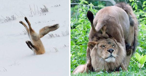 มัดรวมจังหวะหลุดสุดฮาของเหล่าสัตว์โลก ที่เฮฮาจนลืมความน่ากลัวไปเลย