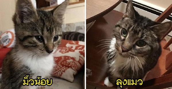 หญิงใจงามรับเลี้ยงลุงแมวอายุ 17 ปี ก่อนพบมิ้วน้อยจรจัดที่เหมือนลุงแมวเธอราวฝาแฝด