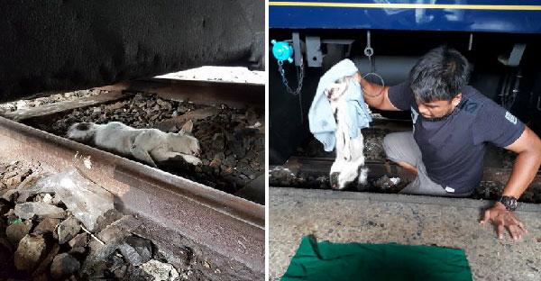 ตามติดทีมงานกู้ภัยหมา-แมว กับภารกิจช่วยชีวิตเจ้าเหมียว ที่ติดอยู่ในห้องเครื่องยนต์รถไฟ