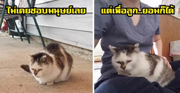 แมวจรหน้ามุ่ยไม่เคยชอบมนุษย์ เปลี่ยนไปไม่เหมือนเดิมเพราะลูกน้อยในท้อง