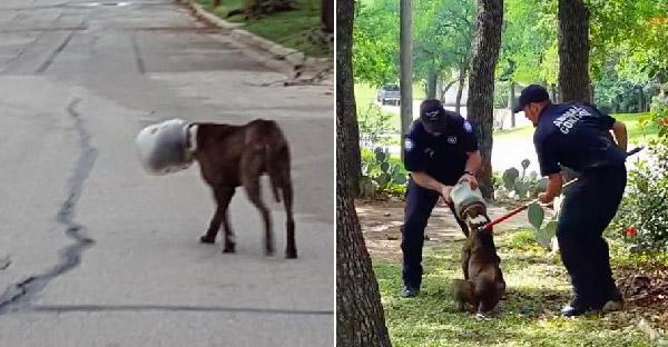สุนัขจรจัดหัวติดกับโหลนาน 3 วัน ก่อนจะมีทีมกู้ภัยช่วยเหลือมัน…สภาพแบบหิวโซสุดๆเลย
