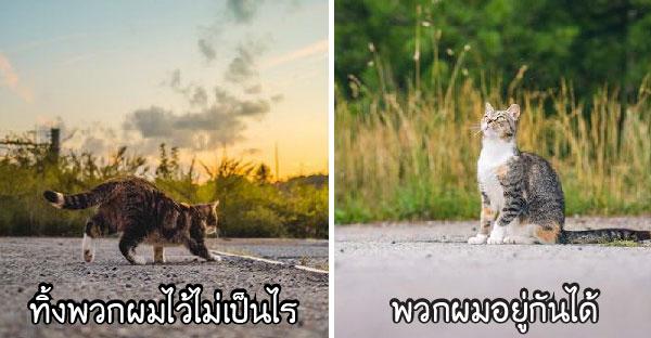 27 ภาพความสวยงามของแมวจรจัดหลายสิบชีวิตที่ซ่อนอยู่ หลังถูกเจ้าของทิ้งข้างถนนอย่างไม่ใยดี