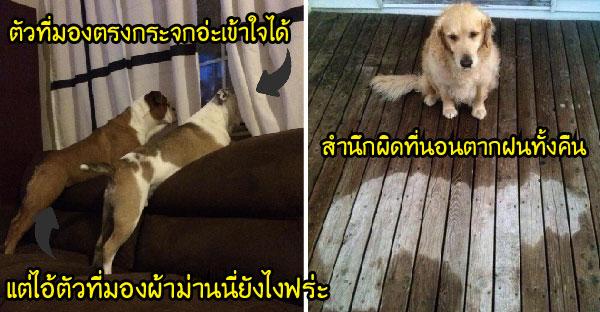 23 ภาพหมาตัวแสบ กับพฤติกรรมสุดฮาที่ยากจะเข้าใจ