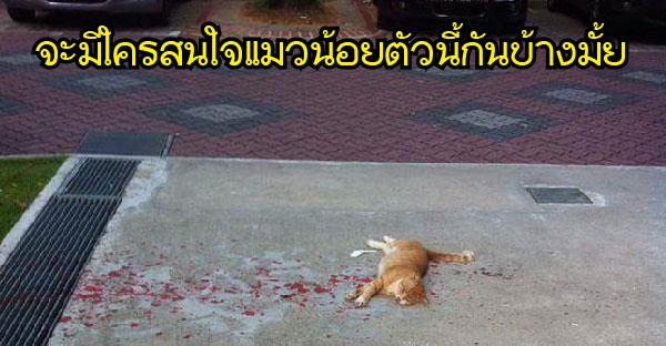 ไม่มีใครสนใจแมวนอนบาดเจ็บอยู่บนฟุตบาท จนกระทั่งหญิงสาวคนนี้เห็นจึงรีบเข้าไปช่วยเหลือ