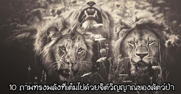 10 ภาพทรงพลังที่เต็มไปด้วยจิตวิญญาณของสัตว์ป่า