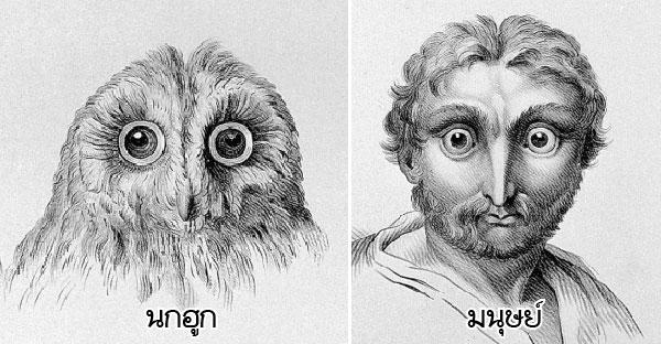 มนุษย์จะมีหน้าตาอย่างไร หากวิวัฒนาการมาจากสัตว์อื่นๆบนโลกใบนี้