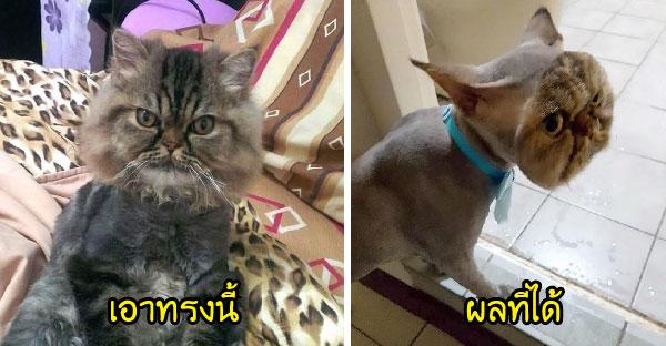 เจ้าของแมวฝากเพื่อนตัวแสบช่วยตัดขนแมวให้หน่อย และภาพที่เห็นทำให้เธอต้องกุมขมับ T^T