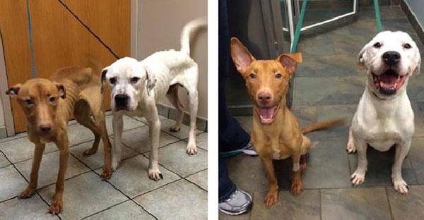 กู้ภัยเข้าช่วยเหลือสองสุนัขถูกขังไว้ในตึกร้าง ช่วยฟื้นฟูจิตใจและร่างกายให้แข็งแรงได้อีกครั้ง