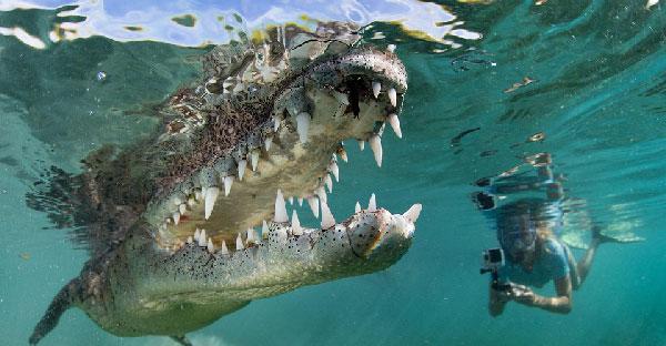 พ่อ-ลูกสาวสุดระห่ำ ! ถ่ายภาพใต้ท้องทะเลของจระเข้ขนาดใหญ่ในระยะประชิด