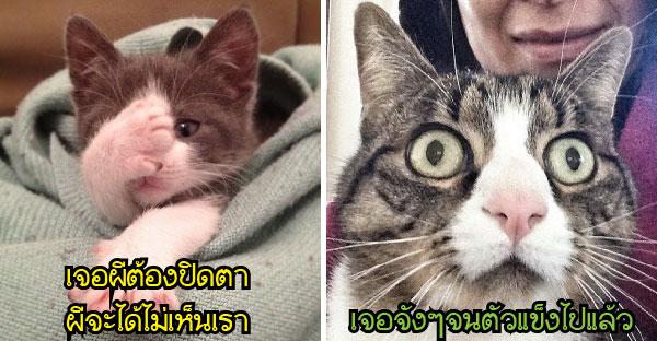 13 ภาพแมวเห็นผีจนทำหน้าตาสุดเหวอ พร้อมเผลอทำท่าหลุดๆแบบฮากระจาย