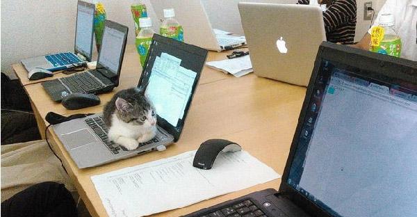 บริษัทในญี่ปุ่นสนับสนุนเลี้ยงแมวในออฟฟิต เพื่อช่วยลดความเครียดให้พนักงานได้เป็นอย่างดี