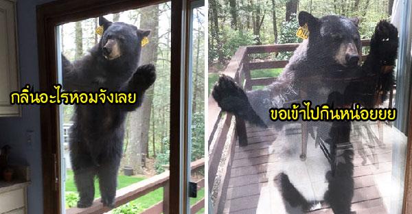 หญิงชราอบบราวนี่กลิ่นหอมรัญจวนใจ จนเรียกพี่หมียักษ์ไม่ได้รับเชิญมาเกาะประตูขอชิมบ้าง