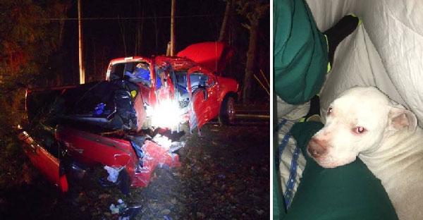 คนเมาขับรถชนต้นไม้อย่างจัง ก่อนวิ่งหนีและทิ้งหมาบาดเจ็บสาหัสอยู่ในรถ