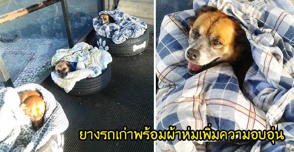 สถานีขนส่งในบราซิลผุดไอเดียยอดเยี่ยมช่วยเหลือสุนัขจรจัดจากความเหน็บหนาว!!
