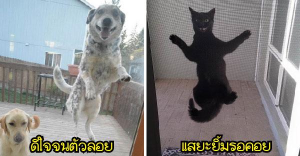 24 ภาพวินาทีแรกที่เจ้าของกลับบ้านมาเจอหมา-แมว..ทำไมมันช่างแตกต่างขนาดนี้!!!