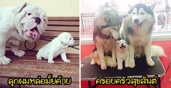 20 ภาพครอบครัวน้องหมาน่ารักน่ากอด ที่จะทำให้คุณอมยิ้มไปทั้งวัน