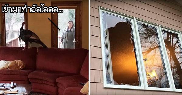 คู่สามีภรรยากลับจากออกทริป..พบแขกไม่ได้รับเชิญบินทะลุกระจกเข้าไปอยู่ในบ้านซะงั้น O_o!!