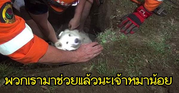 หน่วยฉุกเฉินช่วยชีวิตสุนัขที่ติดในท่อคอนกรีต..เป็นวินาทีที่อบอวลไปด้วยความสุขใจ (⚈▿⚈)