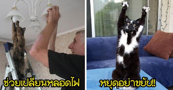 20 ลีลาแมวสุดป่วนกวนไม่เหมือนใคร ที่พวกเราไม่มีวันเข้าใจได้เลย