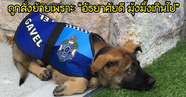 สุนัขตำรวจถูกสั่งย้ายเพราะ อัธยาศัยดี มุ้งมิ้งเกินไป ก่อนได้งานตำแหน่งใหม่ใหญ่กว่าเดิม
