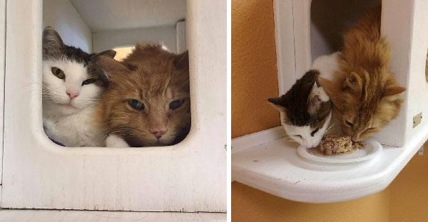 สองแมวจรเจอกันครั้งแรกเหมือนซี้กันมาเป็นสิบปี ใครจะมารับเลี้ยงต้องหนีบไปแพคคู่เท่านั้น