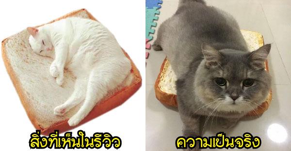 แฟนคลับส่งเบาะหนมปังแมวสุดฮิตให้พี่โบน แต่ความใหญ่มันไม่ได้ไซส์พี่เขาเล๊ยยยย