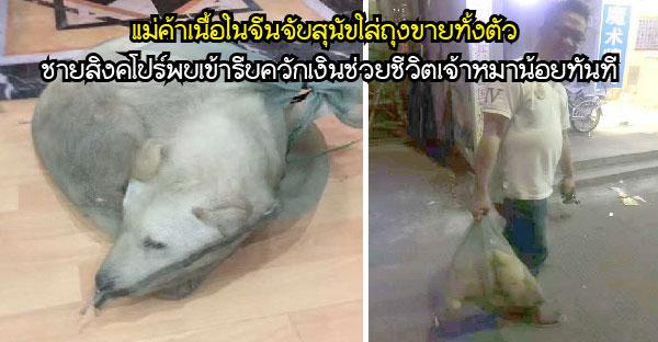 แม่ค้าเนื้อในจีนจับสุนัขใส่ถุงขายทั้งตัว ชายสิงคโปร์พบเข้ารีบควักเงินช่วยชีวิตเจ้าหมาน้อยทันที